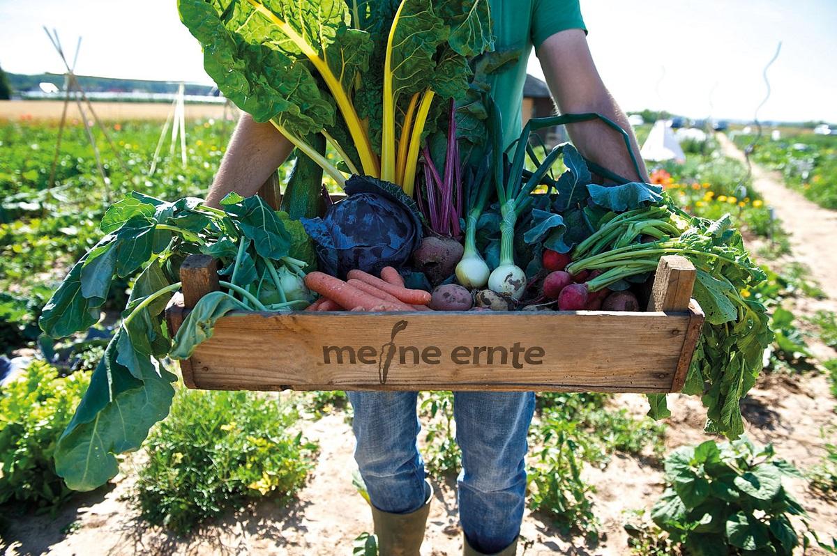 Meine Ernte
